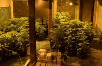 Cannabisplantage Elsdorf