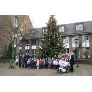 Weihnachtsbaum 12 17 009